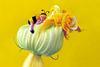 th_beba_cvijet.jpg